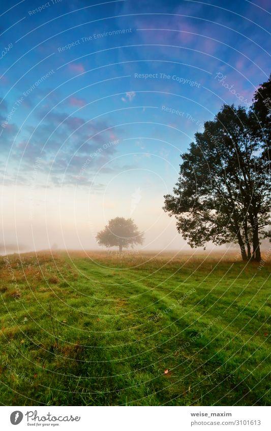 Himmel Ferien & Urlaub & Reisen Natur Sommer grün Landschaft Baum Wolken Wald Ferne dunkel Herbst Umwelt natürlich Wiese Gras
