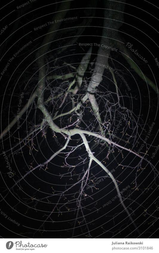 Skelettbaum Umwelt Natur Herbst Winter Baum Ast Wald hässlich kalt lang nackt natürlich grau schwarz Stimmung Einsamkeit Erschöpfung bedrohlich trist gruselig