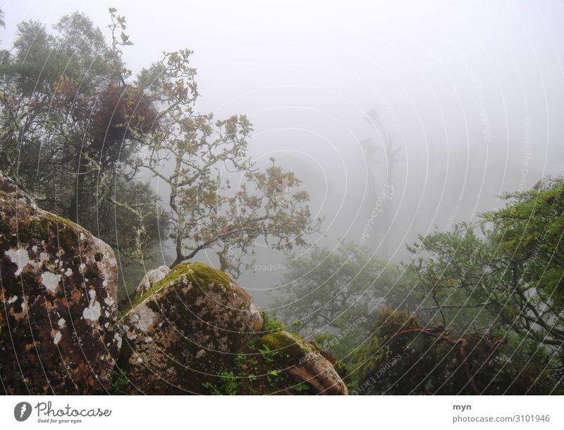 Bäume und Felsen im Nebel Steine unheimlich verwunschen mystisch Mystik gruselig Herbst Angst Einsamkeit schlechtes Wetter dunkel Baum Wald Außenaufnahme Natur