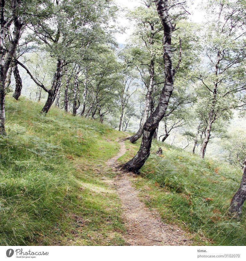 Fingerspitzengefühl in den Schuhen Umwelt Natur Landschaft Sommer Schönes Wetter Pflanze Baum Birkenallee Birkenwald Wiese Wald wandern außergewöhnlich