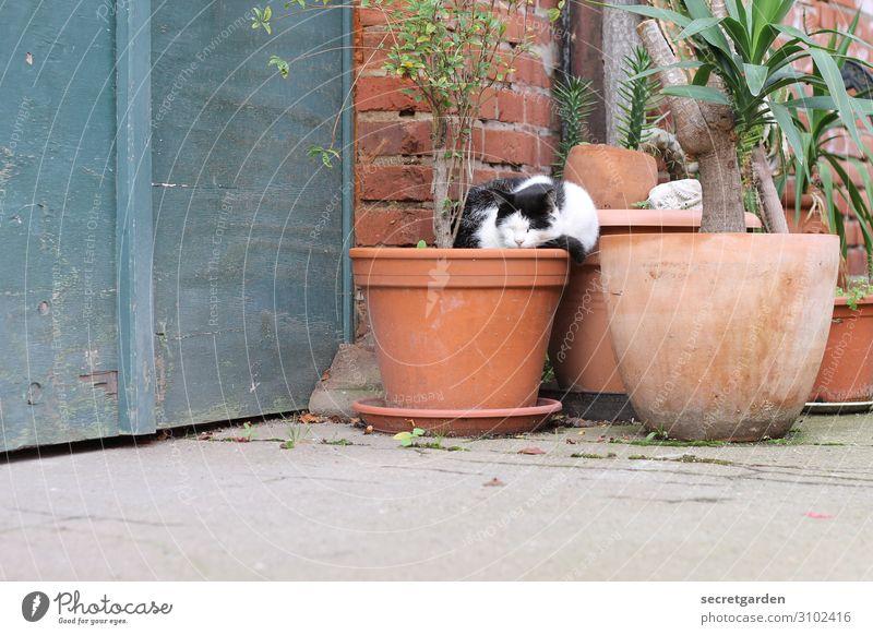 UT Halle | 2014.04 Torwächterin Zufriedenheit Erholung Häusliches Leben Pflanze Sommer Grünpflanze Garten Terrasse Tier Haustier Katze schlafen Wärme braun