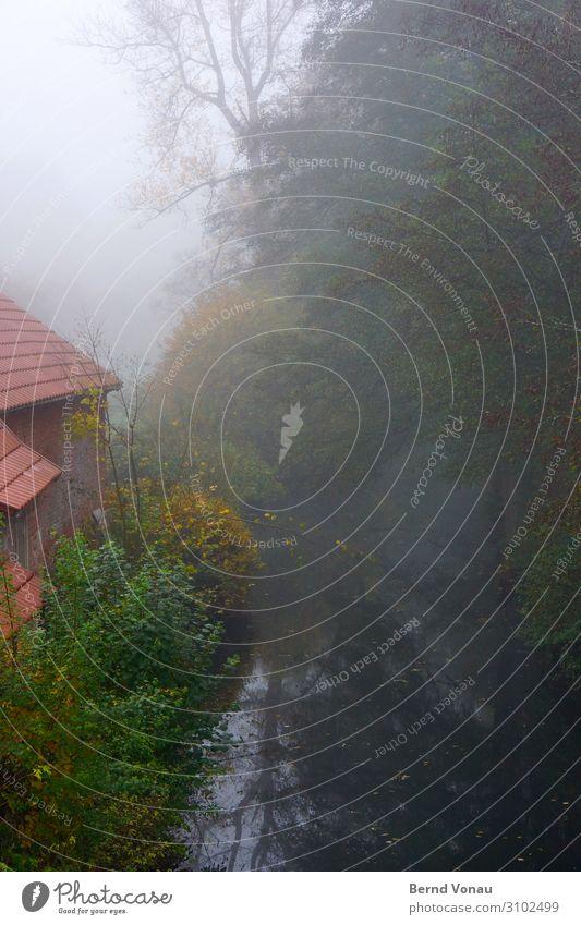 Mühlenmorgen Umwelt Natur Wasser Himmel Herbst Klima Nebel Pflanze Baum Sträucher grau grün rot Dach Bach ruhig Idylle Spiegelbild Haus ländlich ursprünglich