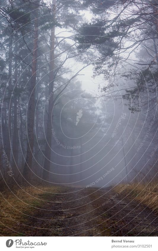 trübligneb Umwelt Natur Herbst Klima Nebel Regen Pflanze Baum Gras Wald authentisch ruhig Wege & Pfade Richtung Perspektive Zukunft Ungewisse Zukunft aufwärts