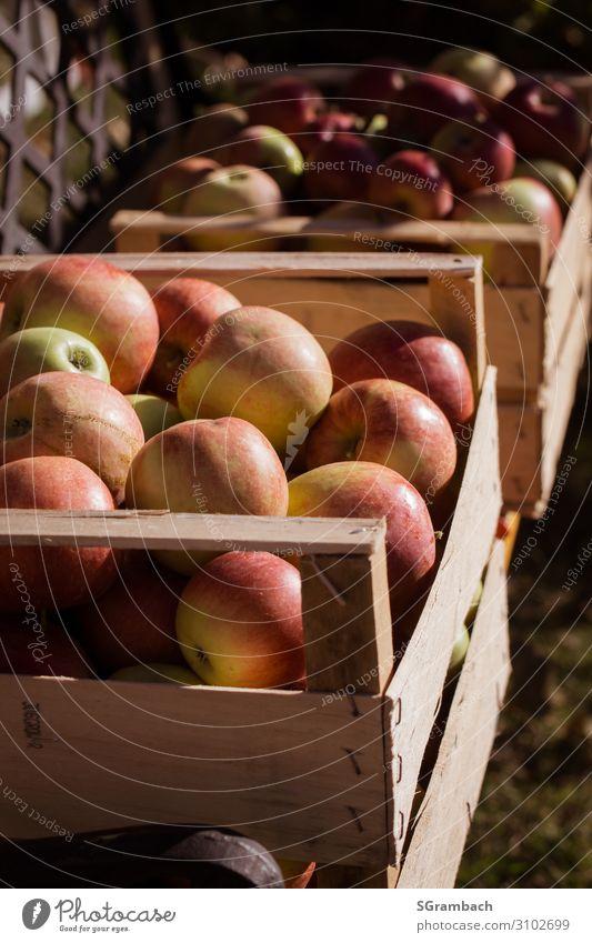 Apfelernte Natur Gesunde Ernährung rot ruhig Gesundheit Lebensmittel Essen Holz Herbst Glück Garten Frucht Zufriedenheit süß