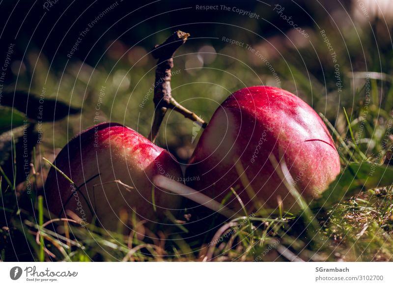 Zwei Äpfel an einem geteilten Zweig auf der Wiese liegend Lebensmittel Frucht Apfel Ernährung Picknick Bioprodukte Vegetarische Ernährung Fasten