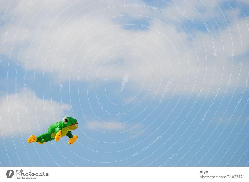 Frosch Drache Drachenfliegen im Himmel vor Wolken springen hüpfen Wind Luft steigen drachensteigen Drachenfest Drachen steigen lassen Kröte Freude blau