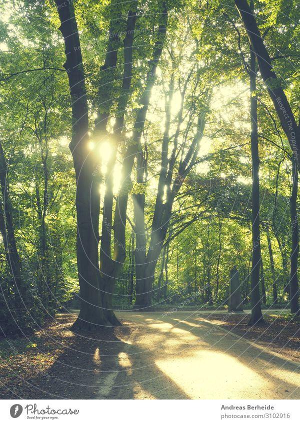 Sonnenaufgang im Park Ferien & Urlaub & Reisen Sommer Natur Sonnenuntergang gelb grün autumn Hintergrundbild beams beautiful beauty blue color colorful day