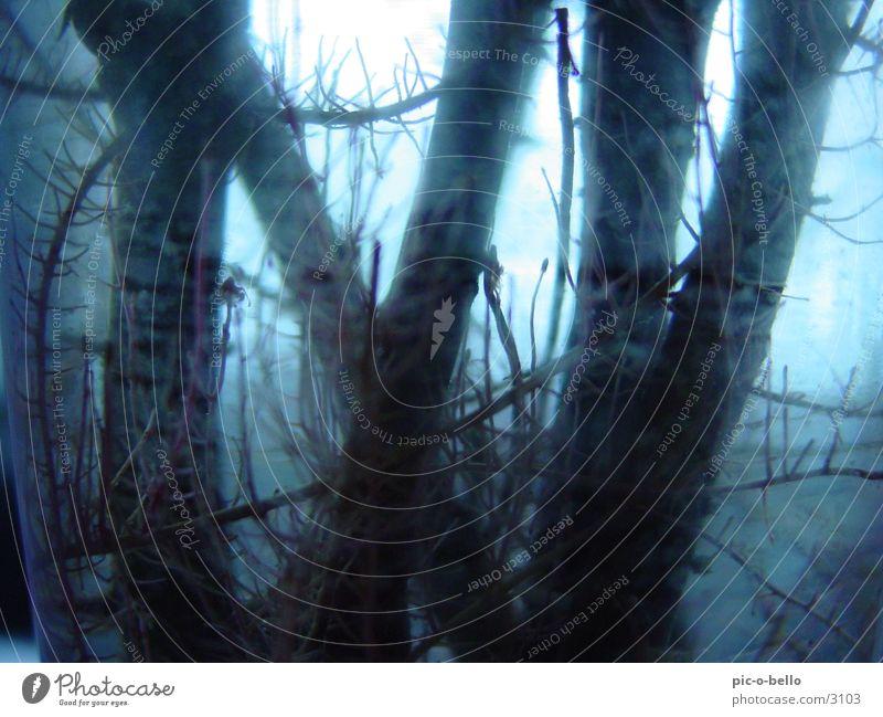 wasser_wurzel Wasser blau grau Nebel Hintergrundbild Wurzel