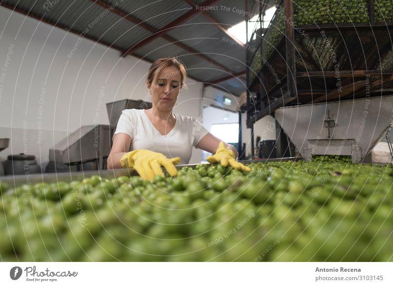 Auswahl der Oliven Frucht Arbeit & Erwerbstätigkeit Beruf Arbeitsplatz Fabrik Industrie Business Unternehmen Mensch Frau Erwachsene Container Handschuhe wählen