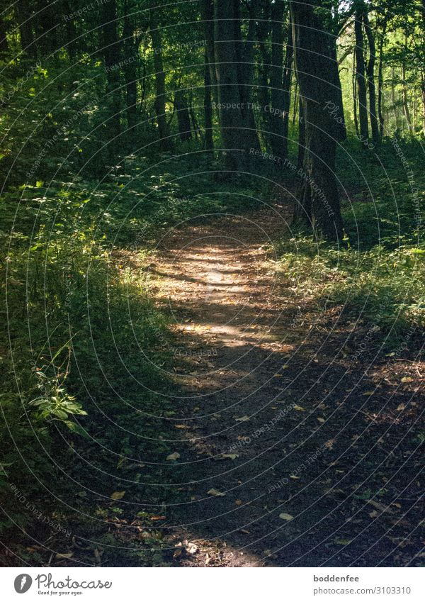 Waldweg - Licht und Schatten Natur ruhig Wege & Pfade Zufriedenheit Freizeit & Hobby Warmherzigkeit Sicherheit Gelassenheit friedlich