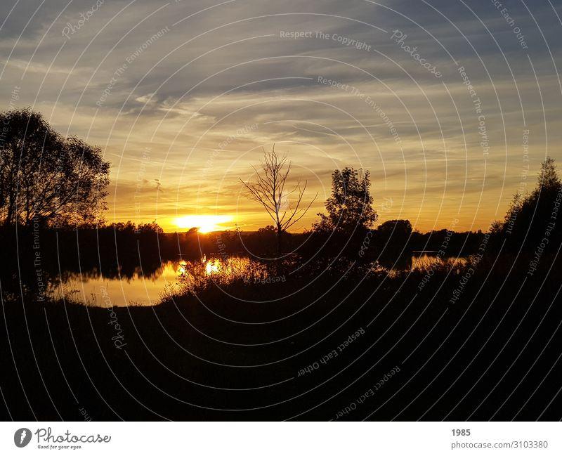 Sonnenuntergang am See Natur Landschaft Wasser Sonnenaufgang Sonnenlicht Sommer Schönes Wetter Baum Sträucher Seeufer Menschenleer beobachten glänzend gehen