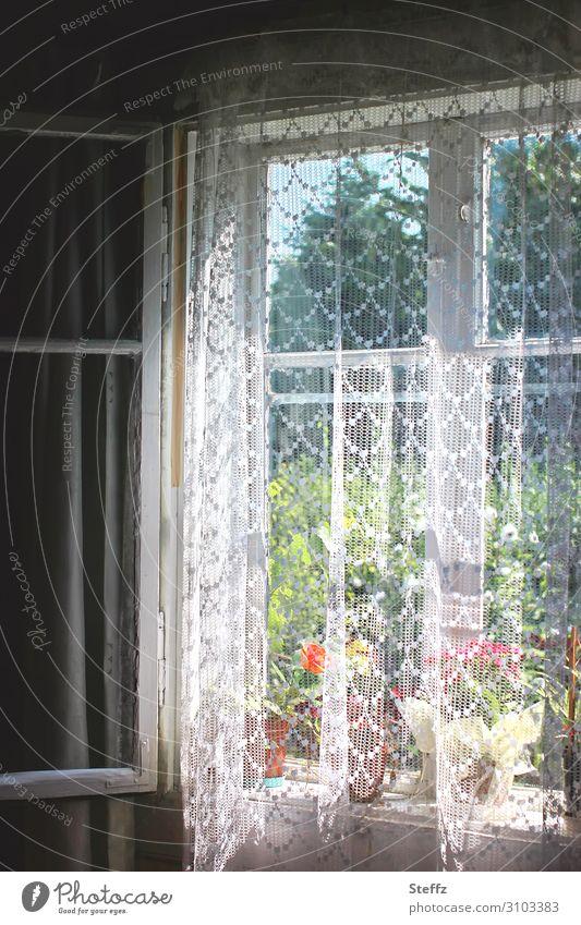 wertvoll | bei Omi Häusliches Leben Wohnung Dekoration & Verzierung Wohnzimmer Schlafzimmer Fenster Fensterscheibe Fensterblick Fensterbrett Gardine Topfpflanze