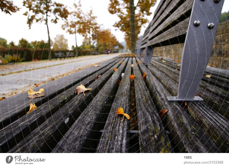 Parkbank Freizeit & Hobby Sightseeing Herbst Baum Blatt Menschenleer Holz Metall Erholung Lächeln laufen lesen Musik hören Blick sitzen Unendlichkeit Freude