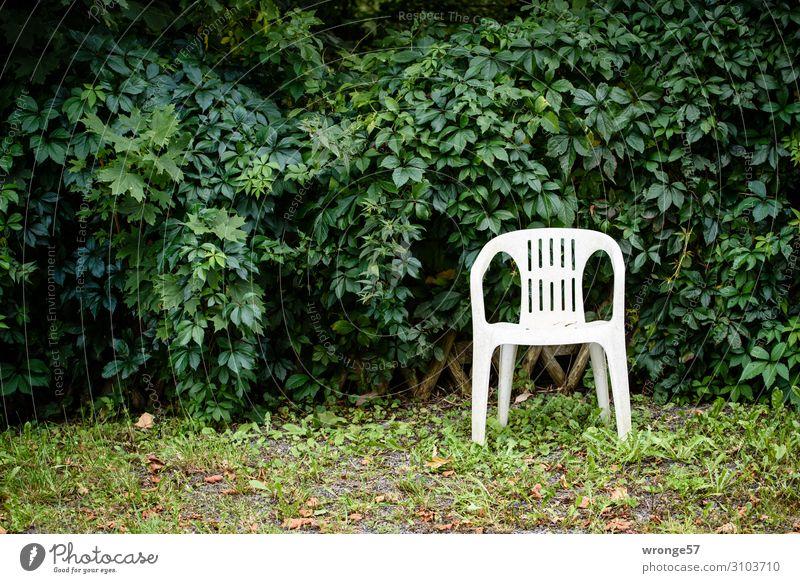 Ein Platz im Grünen Sessel Stuhl Sträucher Garten Plastikstuhl Stadt grün weiß Einsamkeit Erholung ruhig Blatt Grünpflanze Ruhepunkt Ruhemöbel Stillleben