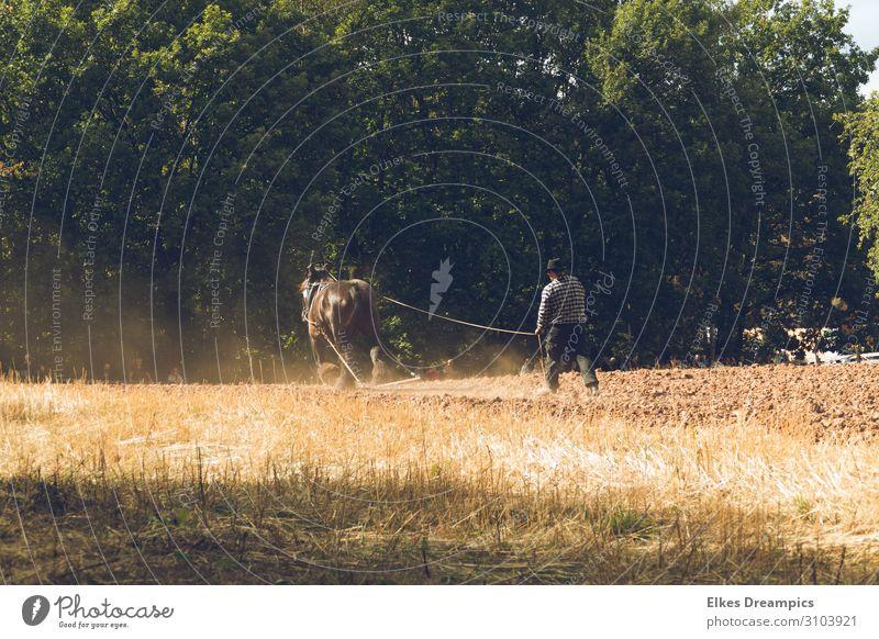 Ernte wie in alten Zeiten Umwelt Natur Landschaft Urelemente Erde Herbst Schönes Wetter Feld Arbeit & Erwerbstätigkeit historisch Herbstlaub Pflug pflügen