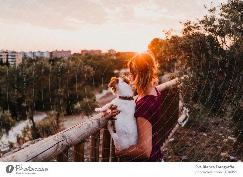 junge Frau und ihr Hund beobachten den Sonnenuntergang in einem Park. Lifestyle Freude Freizeit & Hobby Sommer feminin Junge Frau Jugendliche Erwachsene
