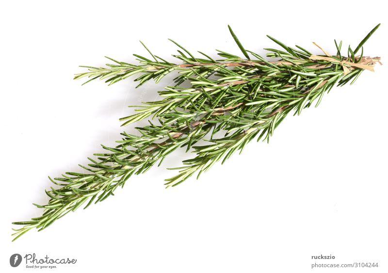 rosemary, officinalis Kräuter & Gewürze Sträucher grün weiß Rosmarin Rosmarinus Heilpflanzen Küchenkräuter Kuechengewuerz Gewuerzkraut Duftkraut Kraeuterpflanze