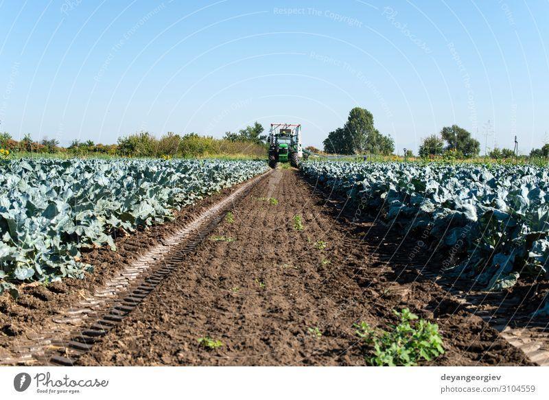 Traktor in Brokkolianbaugebiet. Große Brokkoli-Plantage. Gemüse Vegetarische Ernährung Arbeit & Erwerbstätigkeit Gartenarbeit Umwelt Landschaft Pflanze Erde