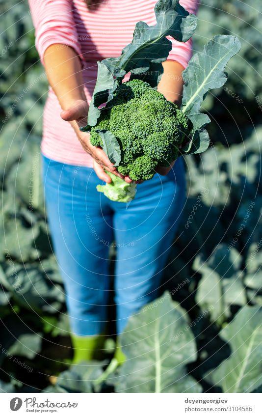 Arbeiter zeigt Brokkoli auf der Plantage. Brokkoli pflücken. Gemüse Industrie Business Umwelt Landschaft Pflanze Verpackung Linie grün Landwirt Ackerbau