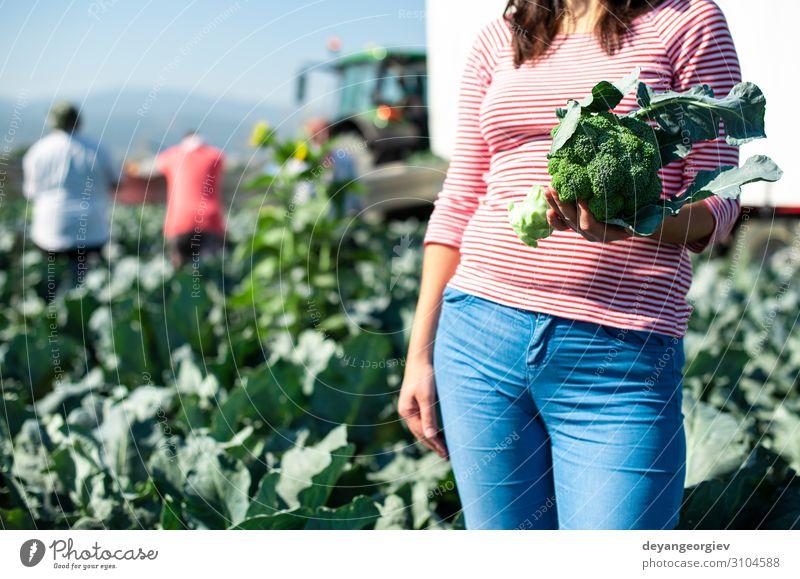 Arbeiter zeigt Brokkoli auf der Plantage. Brokkoli pflücken. Gemüse Industrie Business Umwelt Landschaft Pflanze Traktor Verpackung Linie grün Landwirt Ackerbau