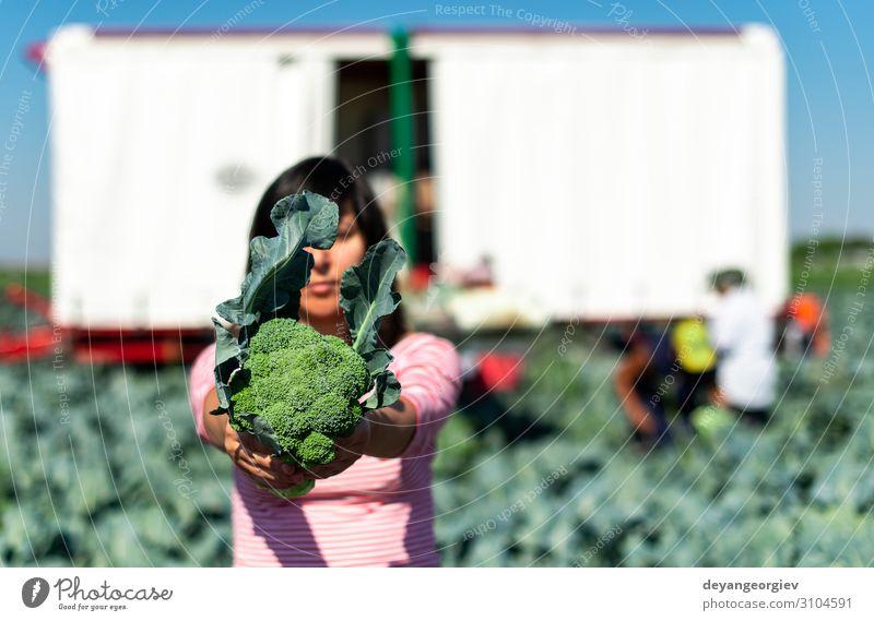 Arbeiter zeigt Brokkoli auf der Plantage. Brokkoli pflücken. Gemüse Industrie Business Technik & Technologie Landschaft Pflanze Traktor Verpackung Linie grün