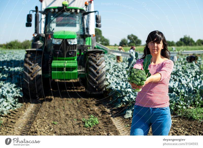 Arbeiter zeigt Brokkoli auf der Plantage. Gemüse Industrie Business Technik & Technologie Landschaft Pflanze Traktor Verpackung Linie grün Landwirt Ackerbau