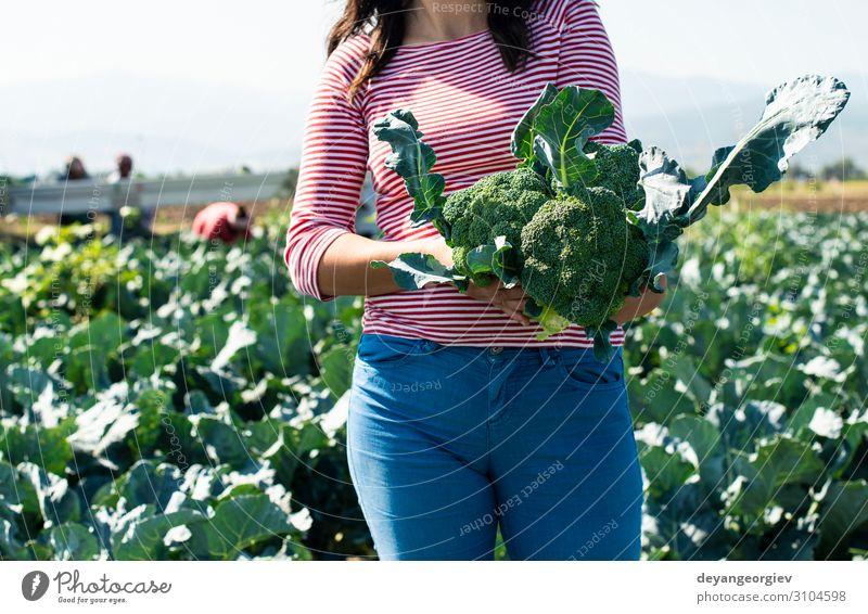 Arbeiter zeigt Brokkoli auf der Plantage Gemüse Industrie Business Umwelt Landschaft Pflanze Traktor Verpackung Linie grün Landwirt Ackerbau Plantagenzeile Feld