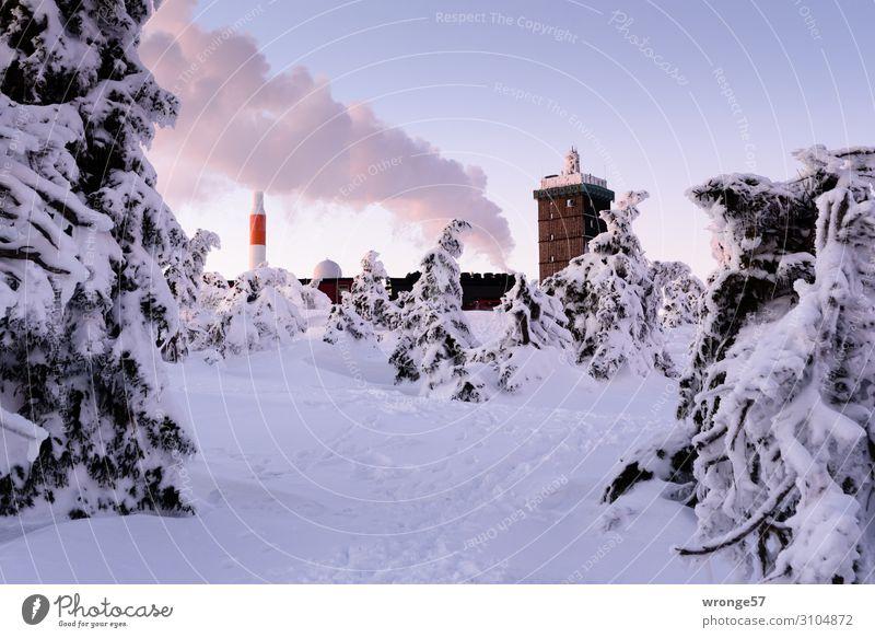 Brockengipfel im Winter V Landschaft Himmel Wolkenloser Himmel Schönes Wetter Eis Frost Schnee Baum Fichte Fichtenwald Berge u. Gebirge Harz Gipfel