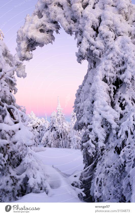 Brockengipfel im Winter VI Landschaft Pflanze Himmel Wolkenloser Himmel Schönes Wetter Eis Frost Schnee Baum Berge u. Gebirge Harz Gipfel Schneebedeckte Gipfel