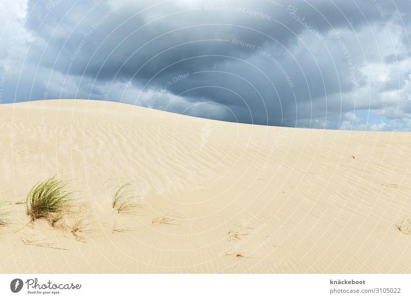 list auf sylt Ferien & Urlaub & Reisen Tourismus Ausflug Sommer Sommerurlaub Strand Insel Umwelt Natur Landschaft Sand Wolken Gewitterwolken Wetter Unwetter