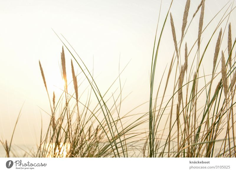 nordsee Ferien & Urlaub & Reisen Tourismus Ausflug Ferne Freiheit Sommer Sommerurlaub Sonne Strand Meer Insel Umwelt Natur Landschaft Pflanze Wasser