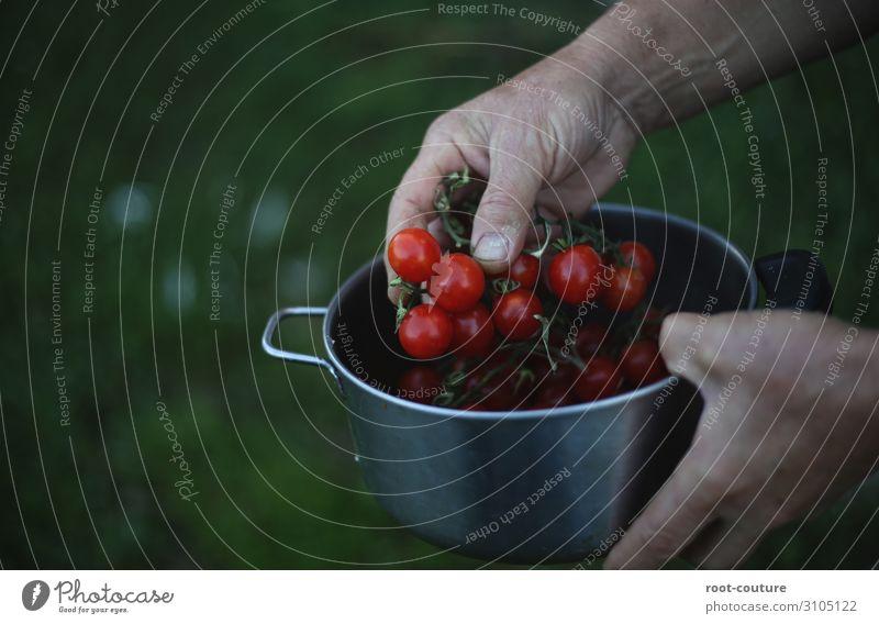 Ein Topf mit frischen Bio Tomaten Sommer Arme Hand Finger Umwelt Natur Pflanze Sträucher Nutzpflanze Garten Feld grün rot Landwirt Vegane Ernährung Essen