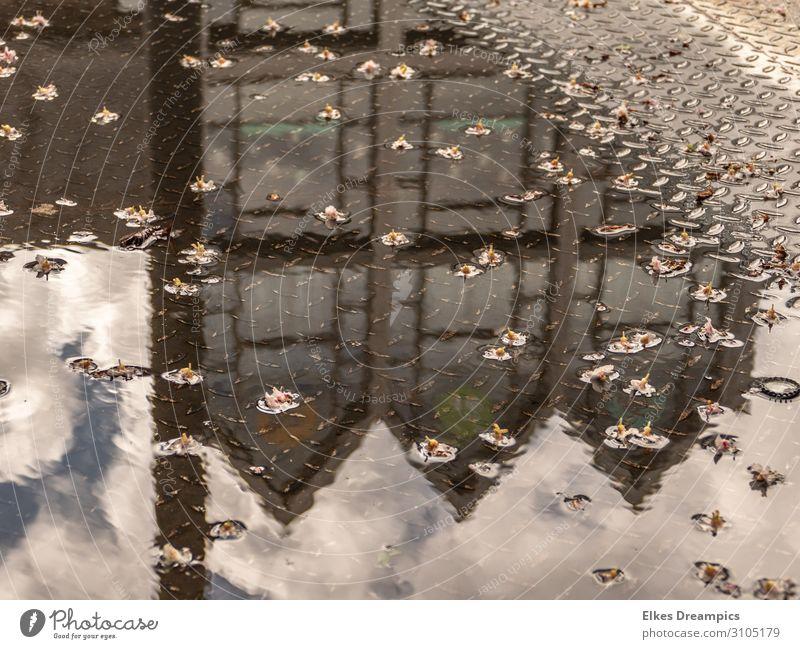 Verkehrte Welt Wasser Himmel Wolken Schönes Wetter Regen Blüte Stadt Haus Gebäude Architektur Idylle Aachen Pfütze Reflexion & Spiegelung Farbfoto