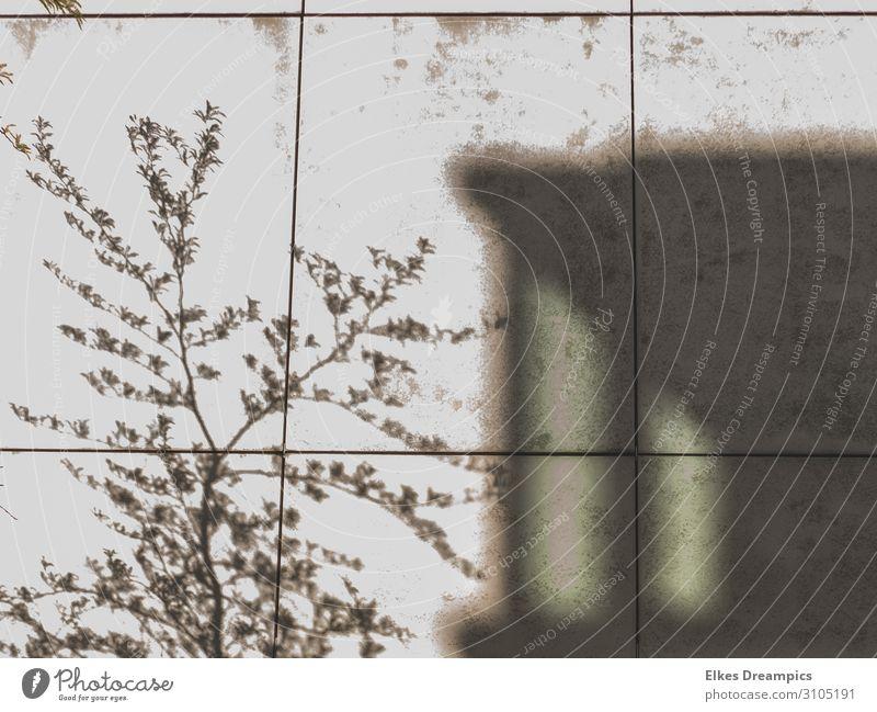 Schatten an der Wand Gebäude Mauer entdecken grau Aachen Schattenspiel Schwarzweißfoto Außenaufnahme Tag Licht Kontrast Silhouette Starke Tiefenschärfe
