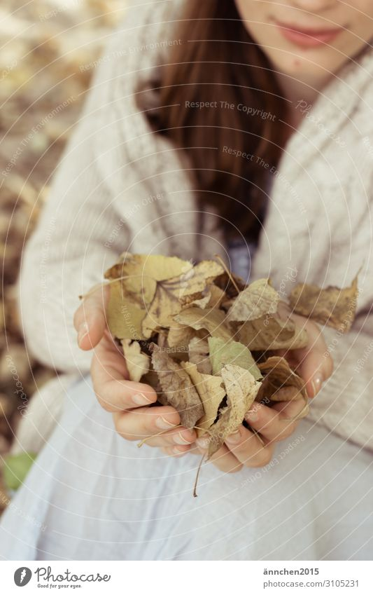 Herbstliebe sammeln Natur Frau Hand Blatt Außenaufnahme Wald weiß braun grün festhalten langhaarig brünett Strickjacke gemütlich