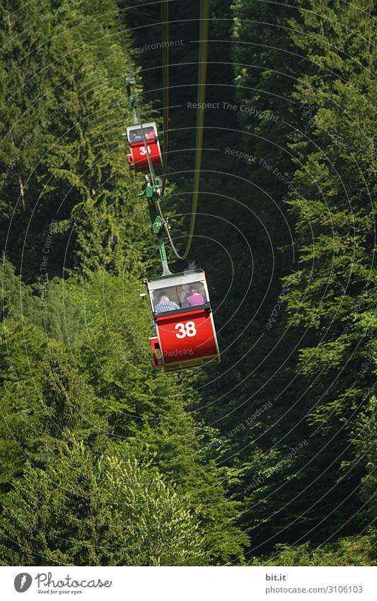 Seilbahn im Wald Ferien & Urlaub & Reisen Tourismus Ausflug Abenteuer Freiheit wandern Umwelt Natur Berge u. Gebirge hoch Gondellift fahren Farbfoto