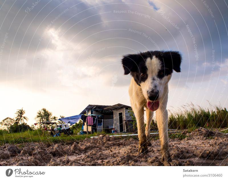 Hund im provisorischen Haus des Bauarbeiters Himmel Gewitterwolken Gebäude 1 Tier Armut niedlich schwarz weiß Einsamkeit Umwelt temporär Konstruktion