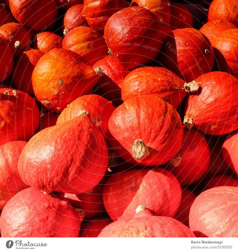 Pumpkins / Kürbis Lebensmittel Gemüse Ernährung Abendessen Vegetarische Ernährung Kürbiszeit Erntedankfest Halloween Feldfrüchte Herbst kaufen Essen orange rot