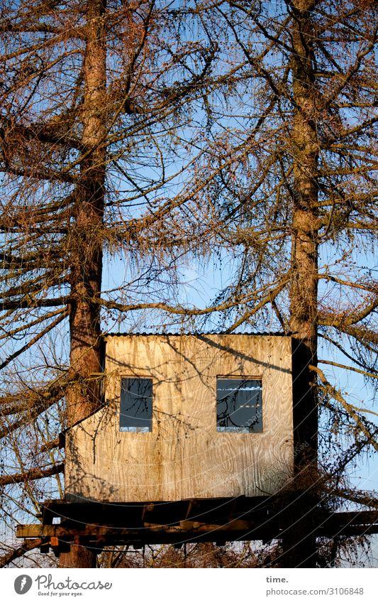 Kinderparadies | wertvoll Umwelt Natur Himmel Schönes Wetter Baum Baumstamm Ast Zweige u. Äste Haus Traumhaus Hütte Bauwerk Baumhaus Mauer Wand Fenster hoch