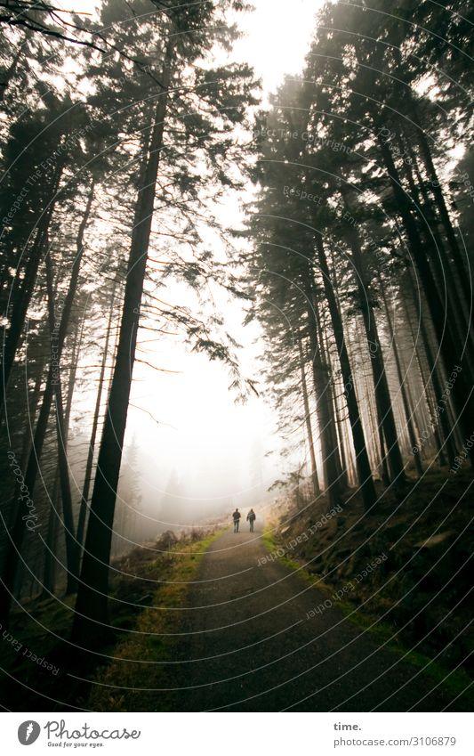 durch den Wald | wertvoll 2 Mensch Umwelt Natur Landschaft Himmel Herbst Nebel Pflanze Blume Nadelbaum Nadelwald Berge u. Gebirge Harz Erholung gehen
