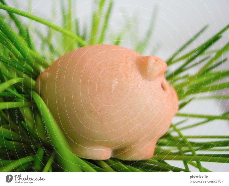 schweinchen grün Tier Gras rosa Dinge Schwein Miniatur Marzipan