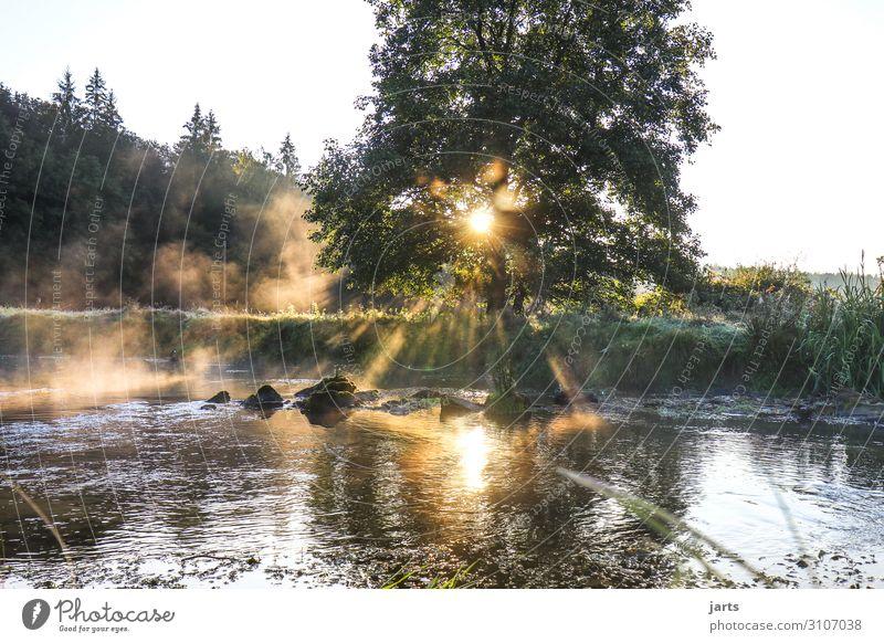morgenstund Umwelt Natur Landschaft Sommer Herbst Schönes Wetter Wald Bach fantastisch frisch hell nachhaltig Romantik Gelassenheit ruhig Baum Farbfoto