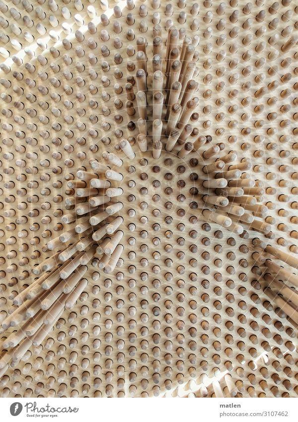 Profil Holz braun grau Zapfen Schattenspiel Lichtspiel Farbfoto Gedeckte Farben Innenaufnahme abstrakt Muster Strukturen & Formen Textfreiraum links