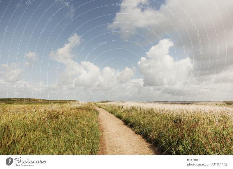 immer geradeaus Himmel Ferien & Urlaub & Reisen Natur Sommer Landschaft Erholung Wolken Ferne Gesundheit Umwelt natürlich Wege & Pfade frisch Idylle Sträucher
