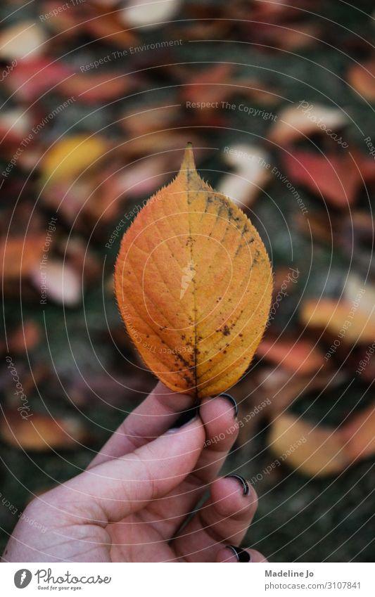Herbstblätter an einem bewölkten Tag Blatt Herbstfärbung Blätter Hand Beteiligung orange kalt Textur natürlich Natur fallen