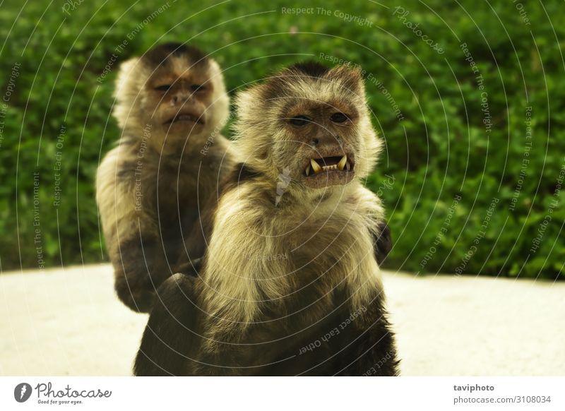 Natur weiß Tier Wald Gesicht Tierjunges Familie & Verwandtschaft braun wild Park Baby niedlich Zähne Wut exotisch Säugetier