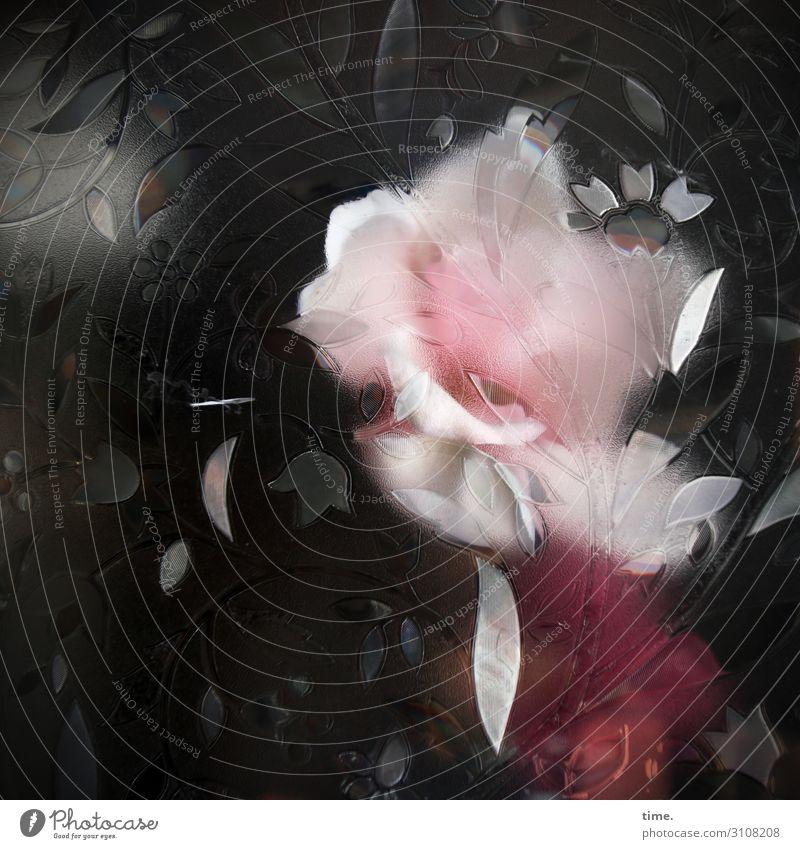 Roxy Music Blume Blüte Fenster Glasscheibe Schaufenster Dekoration & Verzierung Folie Design federartig außergewöhnlich gruselig Schutz Schüchternheit