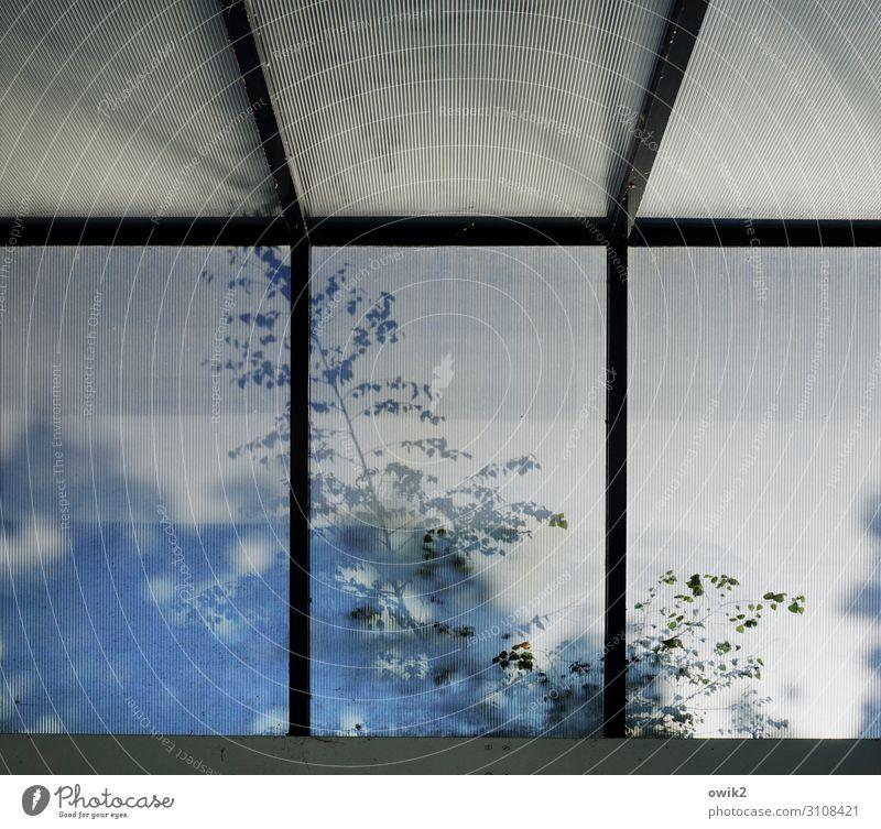 Blätterdach Pflanze Baum Zweig Blatt Fenster Glas Bewegung schemenhaft Dachfenster Tankstelle Farbfoto Gedeckte Farben Außenaufnahme Strukturen & Formen