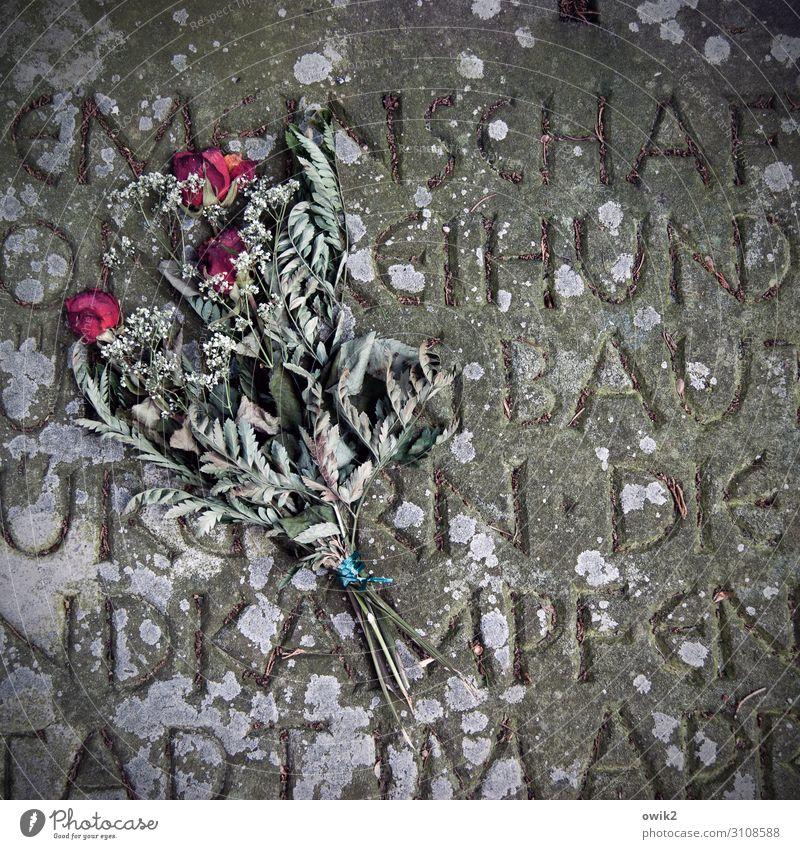 Gegangen Grabstein Aufschrift Rose Blumenstrauß Stein Schriftzeichen liegen alt trocken unten Traurigkeit Sorge Trauer Tod Sehnsucht Einsamkeit Ewigkeit Verfall