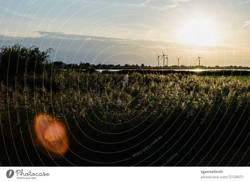 Sonnenuntergang an der Ems Ferien & Urlaub & Reisen Tourismus Umwelt Natur Landschaft Pflanze Schönes Wetter Gras Sträucher Grünpflanze Wildpflanze Wiese Fluss